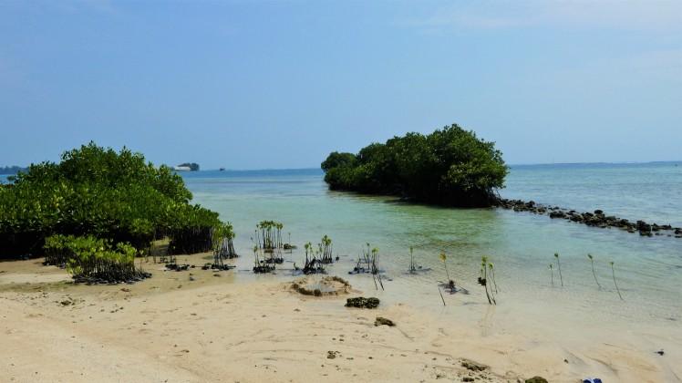 Pramuka Island (10)