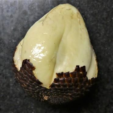 fruit (5)
