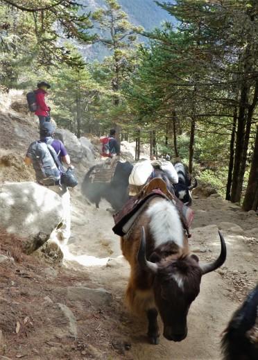 Nepal deel 2 (129)
