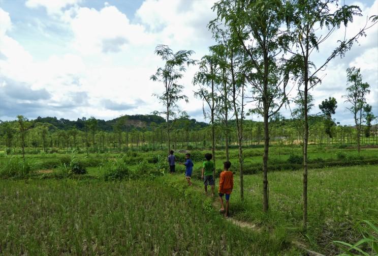 Nieuwsgierige kinderen in de rijstvelden.