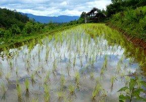 Blog Chiang Mai20