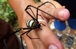 Onze gids vangt een grote spin.
