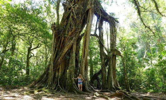 Hoge bomen bewonderen in de natuur.