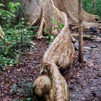 Natuur, cultuur en bloedzuigers in Zuid-Vietnam