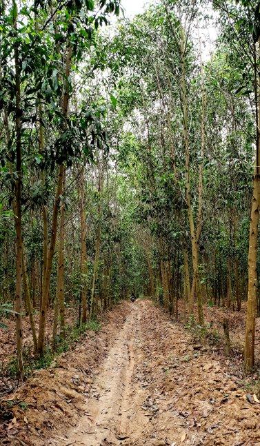 Vietnam blog deel III 212
