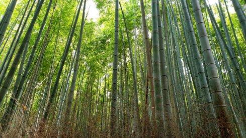 blog japan75