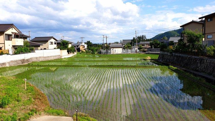 blog japan79